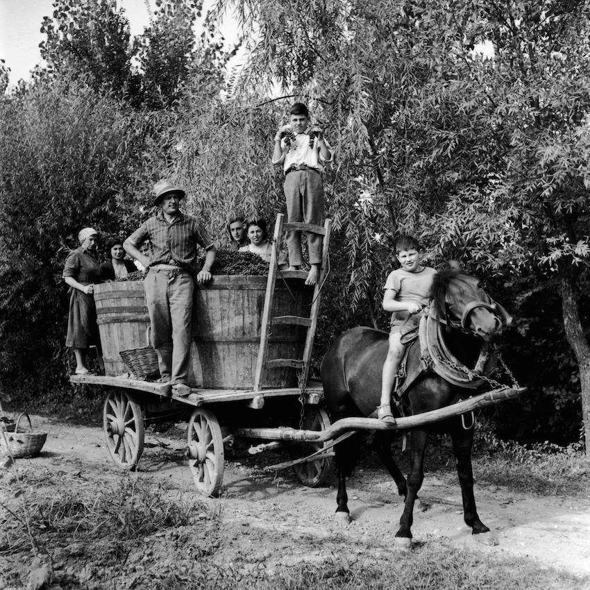 Il paese dell'uva. Casarsa 1950-1963